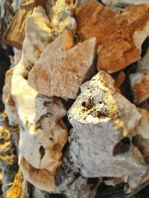 Декоративен жив камък за алпинеум