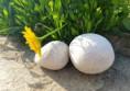 бели речни камъни овални раймар кресна (4)