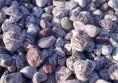 камъни за декорация