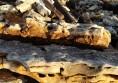 камъни за алпинеум декорация цена