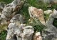 камъни за алпинеум