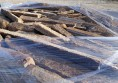 rusty brown stenari кокали кафяви (7)