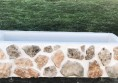 цветарници бетонови големи (11)
